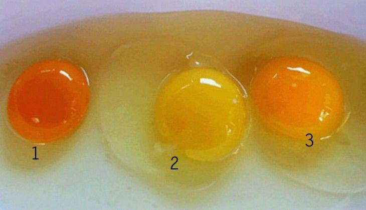 Qual ovo faz bem à sauúde
